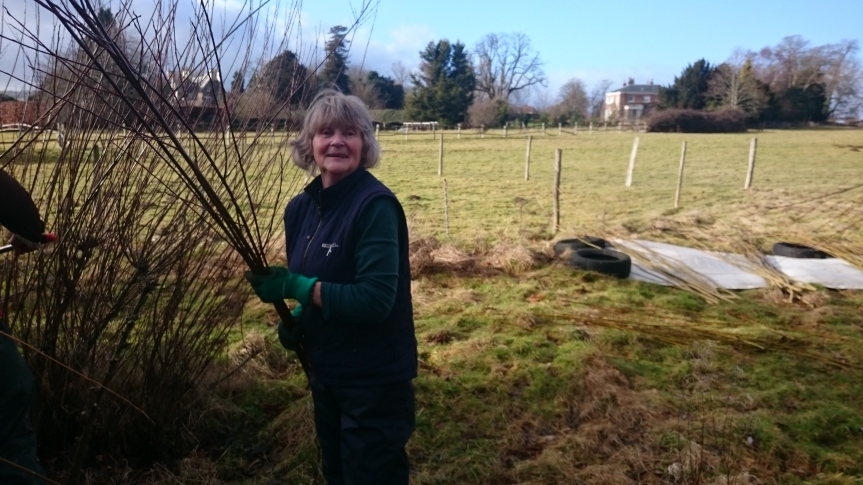Cutting Willow at Baulcombes Barn